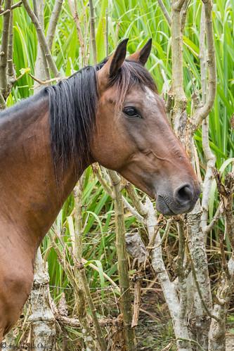 caballos colombia florida naturaleza potrero valle