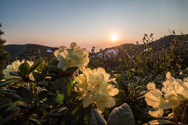 20150614-北海道羊蹄山(2日目)-0800.jpg