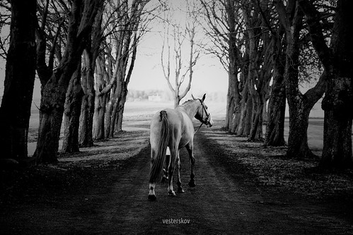 horse daniel dansk hest rioblanco varmblod vesterskov lykkesborg