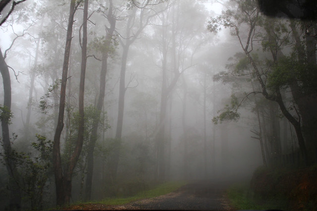 On the way to Horton Plains National Park- Sri Lanka