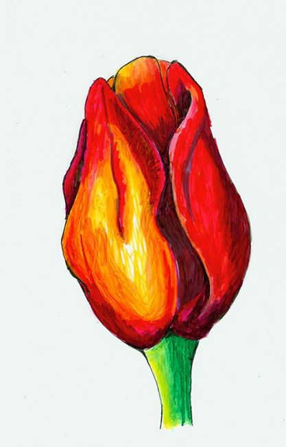 tulip-markers