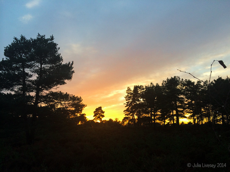 Sunset over Upton Heath