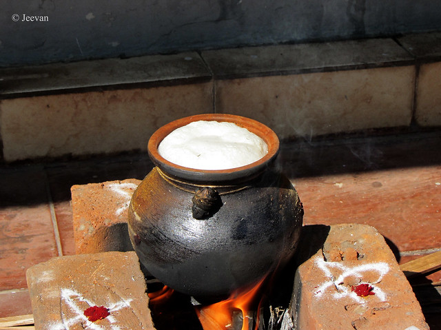 Our Pongal Pot