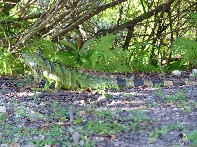 Zoo Miami 14.11.2014 155