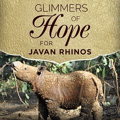 The existence of Javan rhinos in Indonesia's Ujung Kulon National Park is nothing short of a miracle. This critically endangered species has numbered around 50 rhinos for decades. With a donation of any amount, you can help keep hope alive for Javan rhino