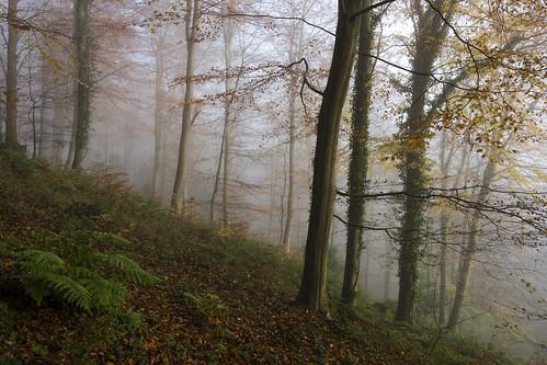 autumn mist leighwoods