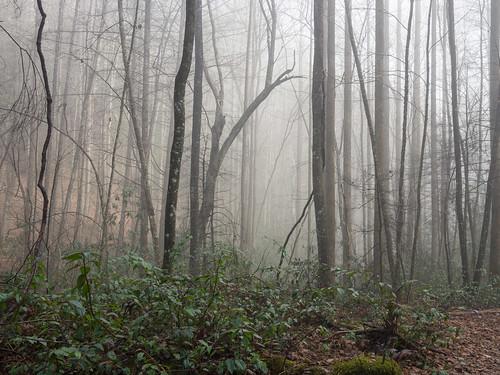 Tom Miller Trail - 7