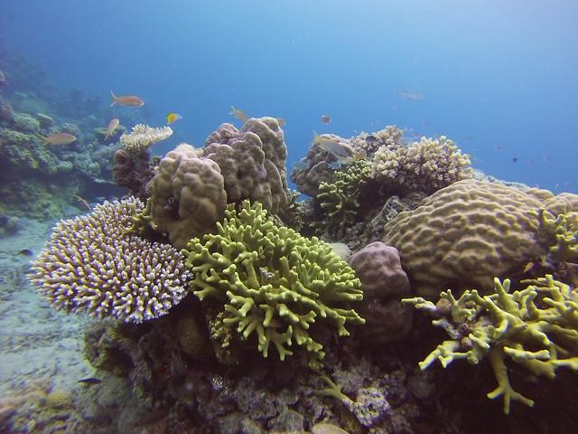 House Reef   Moyo Island