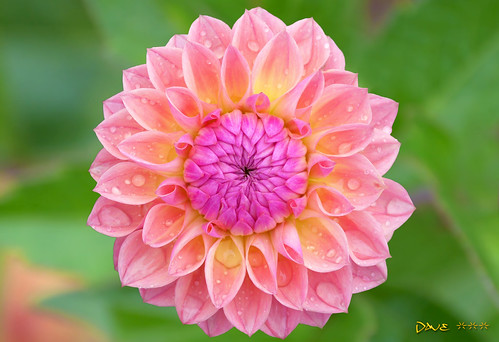 Candy Flower ~~