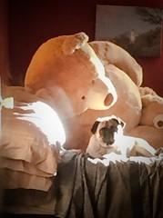 Sunbather Bear