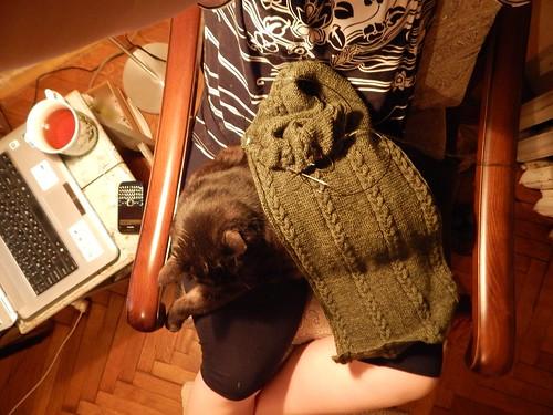 котоселфи с зеленым шарфом | ХорошоГромко.ру