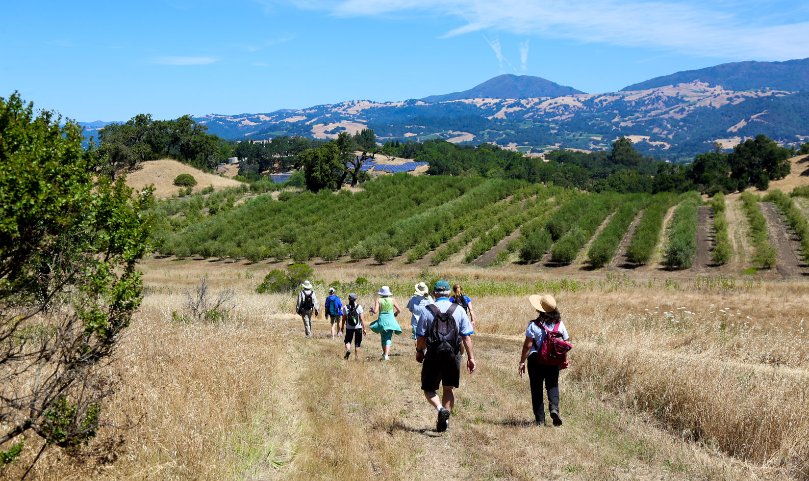 Best Hiking in Sonoma County | Vineyard Hikes with Views |Hiking Wine