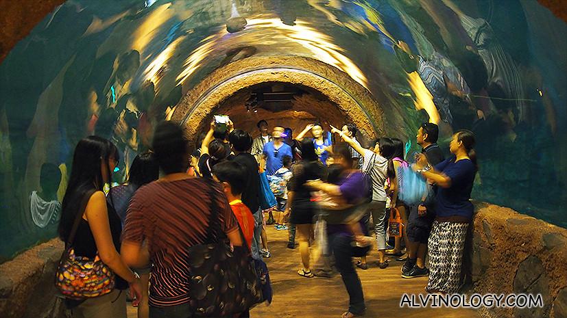 The aquarium by night