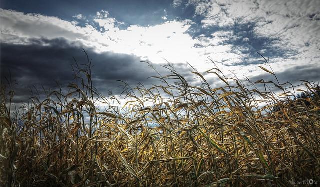 Hubert Dohr - summer is over
