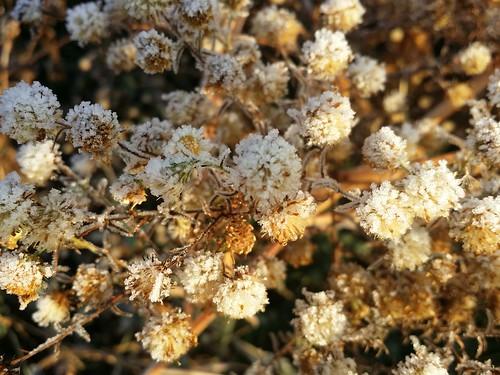 서리꽃  | 공릉천