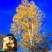 Fall Colors, North Rim, Grand Canyon, AZ.