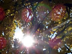 I love the Autumn colors with sun rays.
