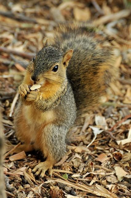 can squirrels eat pumpkin seeds