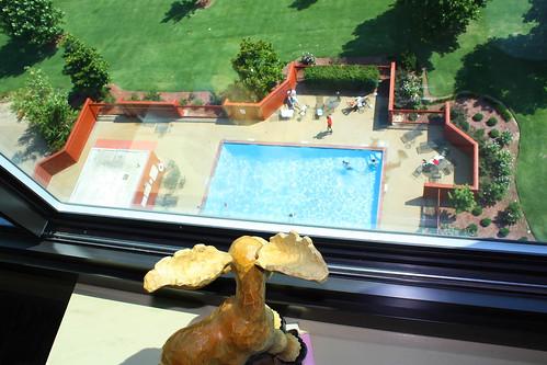 window pool dave wednesday roadtrip moose mascot windowview lookingout memphistennessee windowwednesday moosecot