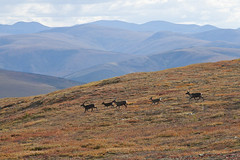 BLM Winter Bucket List #4: Steese National Conservation Area, Alaska, for Untouched Scenery