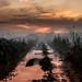 Muddy walk home in the fog, Westcott by Mark Candlin