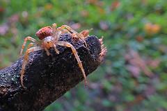 Dialogue avec mon araignée...  Dialog with my spider...