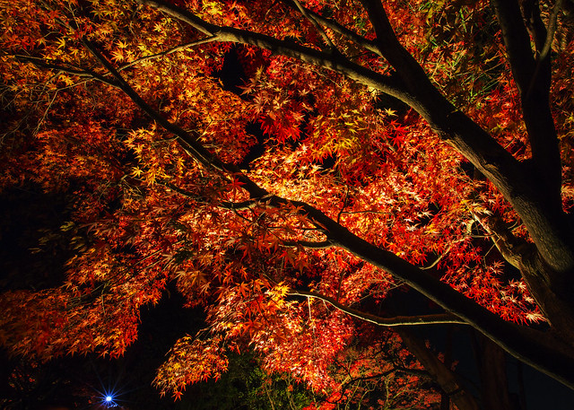 追楓--日本清水寺夜楓