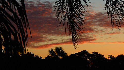 morning red wallpaper sky orange color silhouette yellow clouds sunrise palms landscape nikon flickr florida tropical coolpix bradenton p510 mullhaupt cloudsstormssunsetssunrises jimmullhaupt