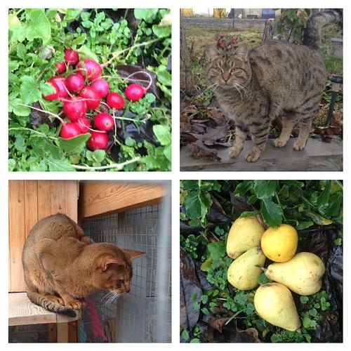 Предновогодние крымские дни - с погодой повезло, руккола на салат пока в огороде))) #старыйкрым