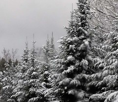 Winter Storm - Huron National Forest