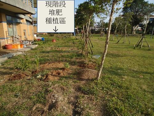 校園一景。樹的兩旁貌似差異不大,但踩踏的觸感非常明顯-左邊土壤鬆軟多了。