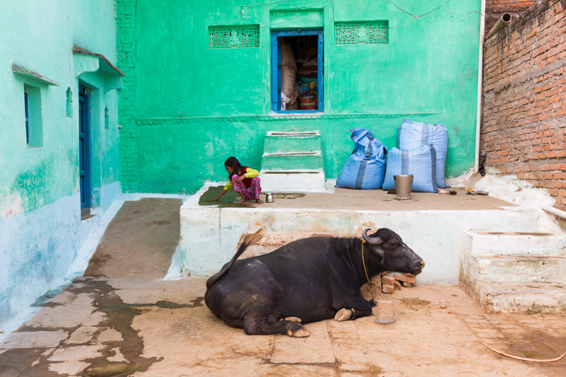 Girl and Bull, Chitrakoot