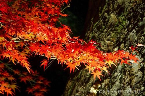 2014京阪神-永觀堂夜間拜觀2288_001