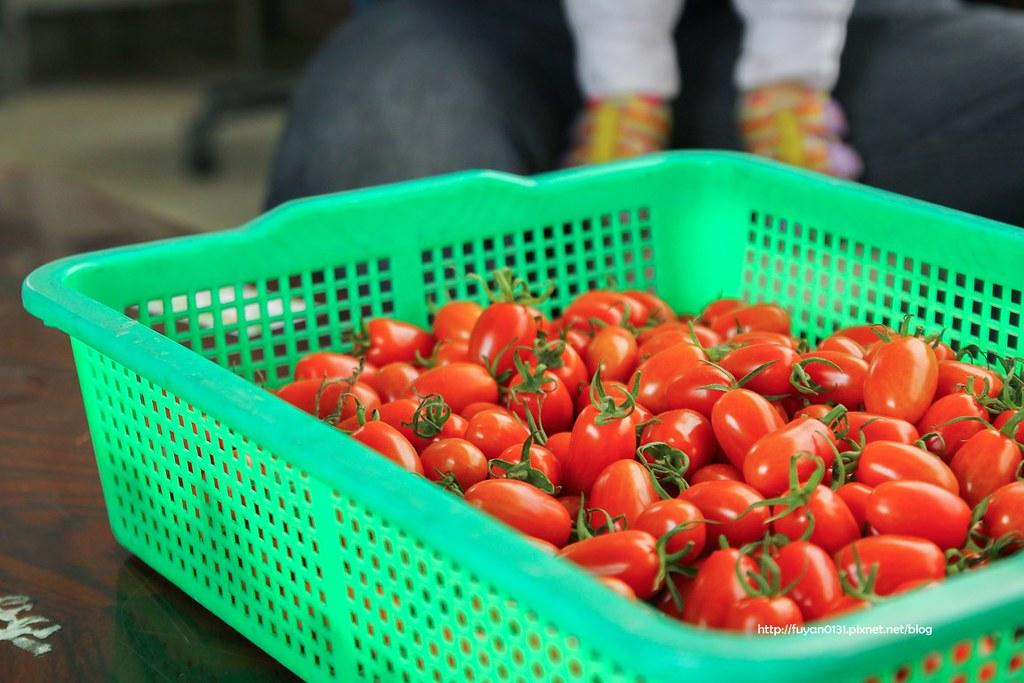 番茄 (5)