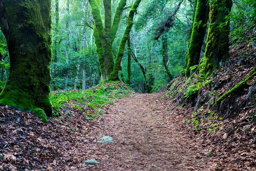 california tree forest landscape moss path trail santacruzmountains uvascanyon