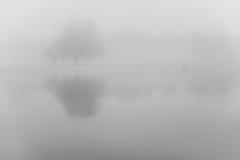 foggy album
