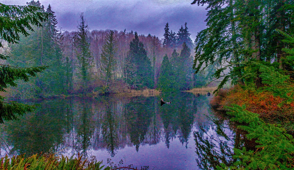 Cresent Creek Wetlands | Gig Harbor Weather | Flickr