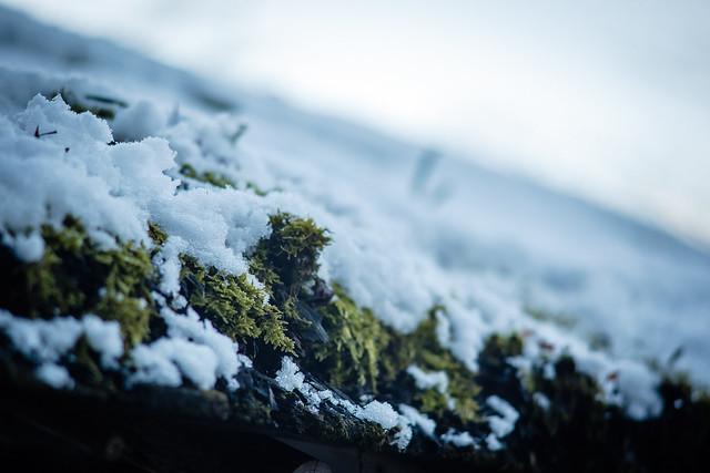 雪,金閣寺