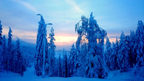 travel sunset snow tree finland sony skijump ruka