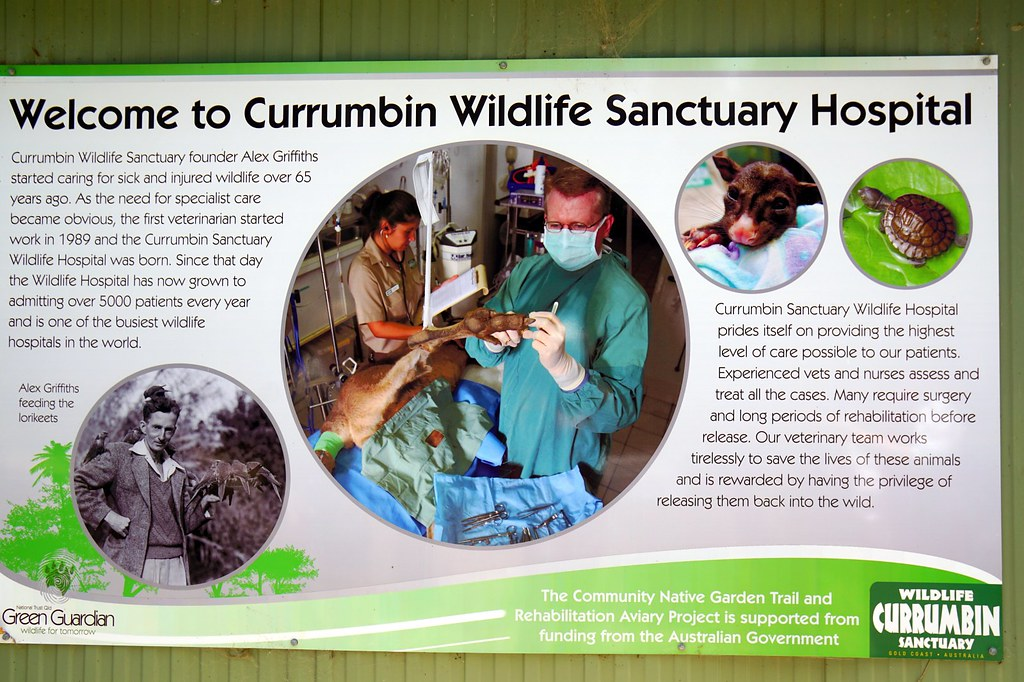 Currumbin Wildlife Sanctuary - hospital