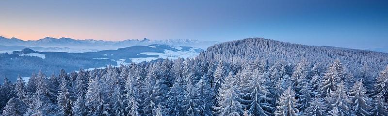 Snow covered trees and the Alps - Chuderhüsi