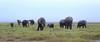Elephants at Amboseli NP, kenya