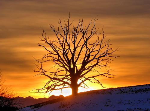 sunset sky tree germany bayern bavaria evening sonnenuntergang oberbayern upperbavaria deadtree baum abendstimmung abends dietramszell toterbaum claudemunich egling harmating