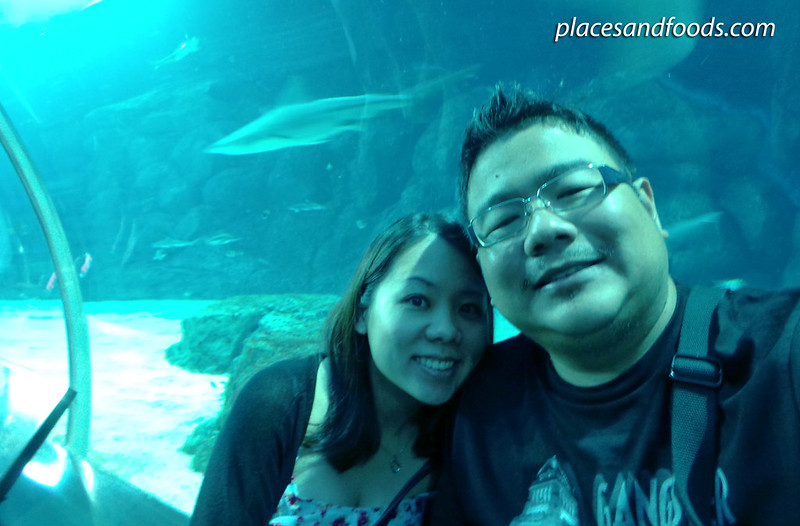 sea aquarium placesandfoods