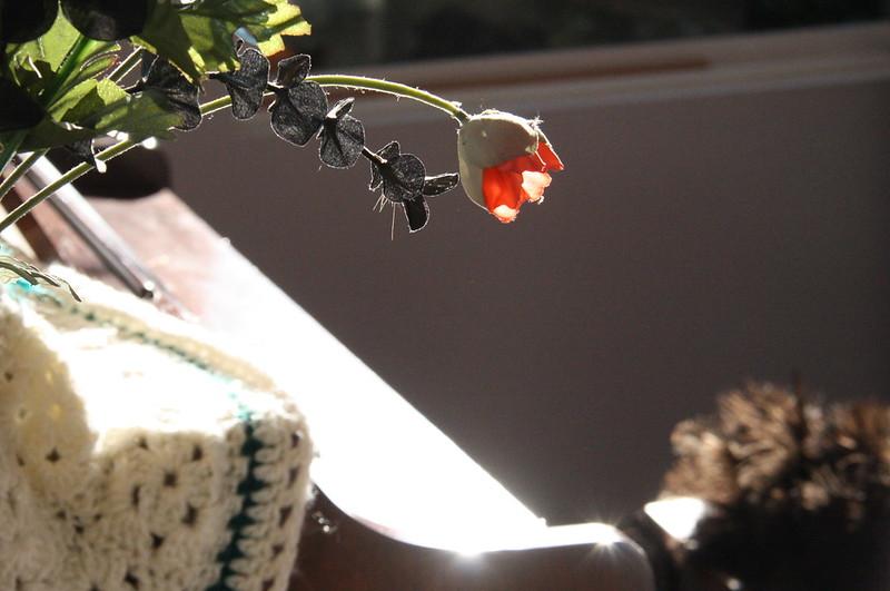 Fake flowers.