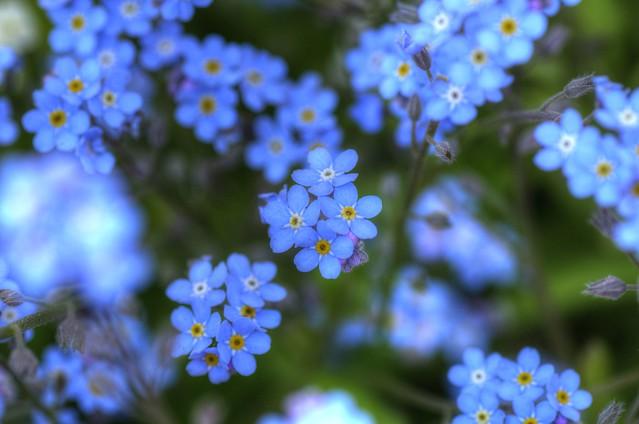 Blumen Planzen
