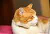 Cats-0017-20141027.jpg