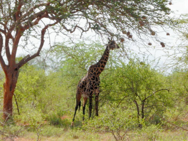 Kenia2007-0381