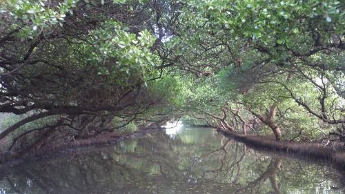濕地保育計畫將依照濕地利用的不同功能分區。圖為四草濕地。