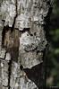 Everglades Tree Bark #1